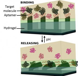 The image illustrates a key feature of the advances made by ASU assistant professor Ximin He and her research partners. It shows the capture and release of specific target biomolecules from an ingoing solution mixture in a microfluidic system occurs by the concerted, dynamic and reversible action of hydrogel volume change and aptamer bind-and-release through changes in solution pH. (Image courtesy of Ankita Shastri and Ximin He.)