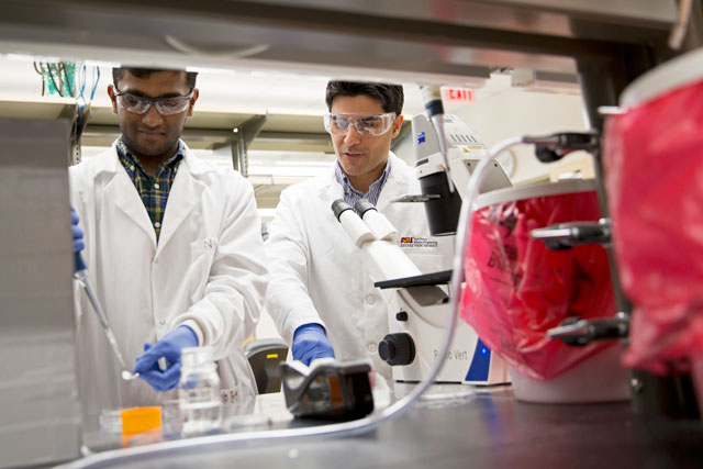Nitish Peela (left) working alongside assistant professor Mehdi Nikkhah in the Nikkhah Lab. Their research focuses on creating 3-D breast tumor models on a chip. Photographer Jessica Hochreiter/ASU