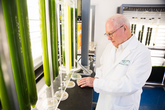 Photo of Professor of Applied Biological Sciences Milton Sommerfeld in his laboratory.